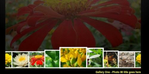 Fisheye Photo Gallery