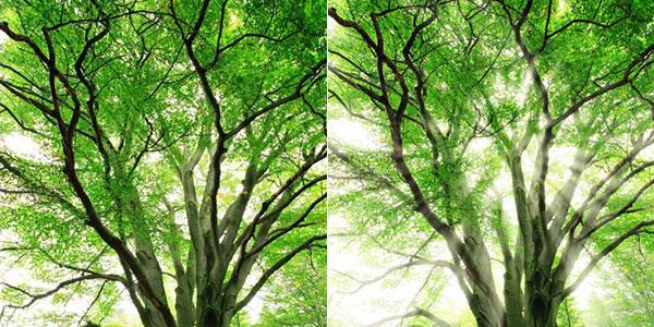 Adding Sunlight Through The Trees