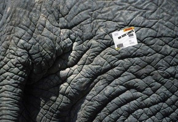 DHL Express: Elephant. No size limits
